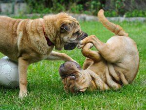 Dog Daycare Equiment