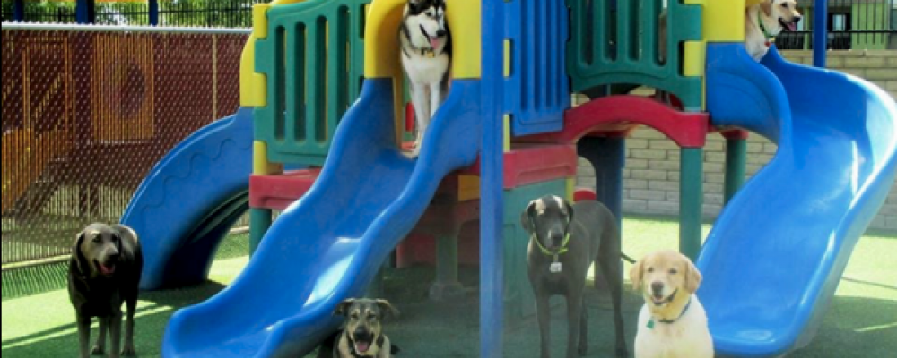 Are You Finding the Best Collection of Dog Park Playground Equipments Online?